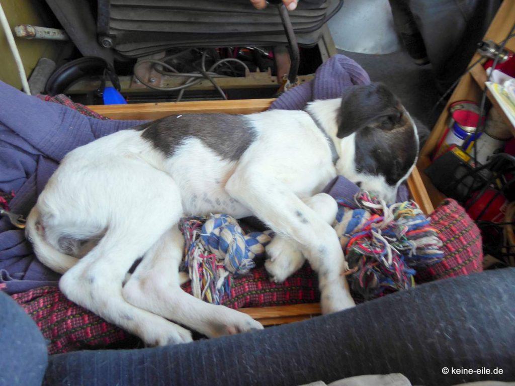Thea schläft während der Fahrt