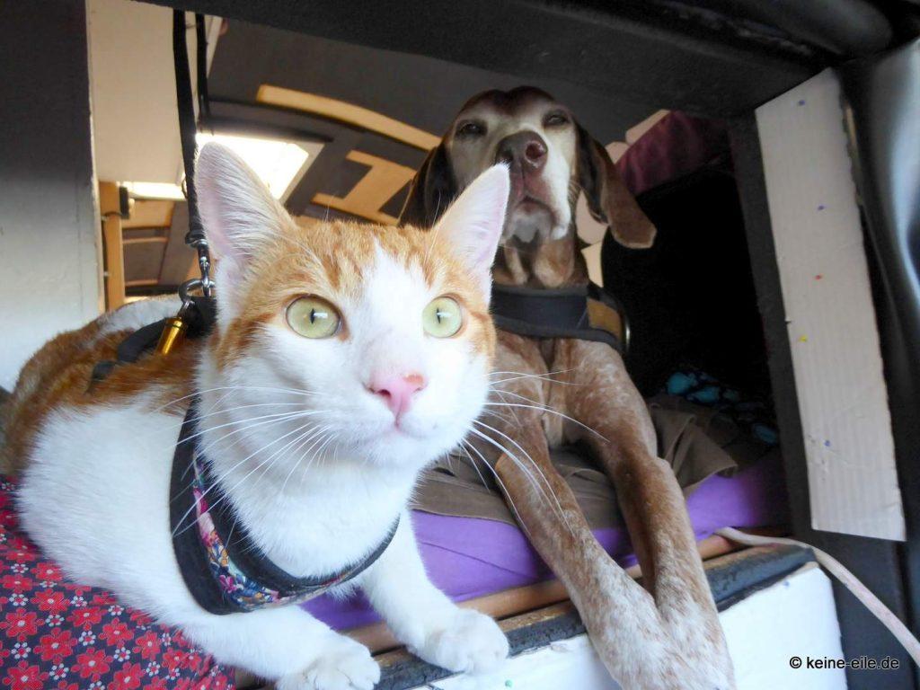 Katzi und Lucy schauen lieber raus