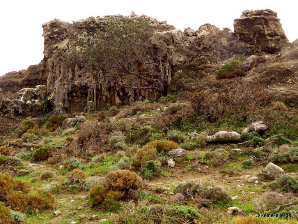 Versteinerter Wald