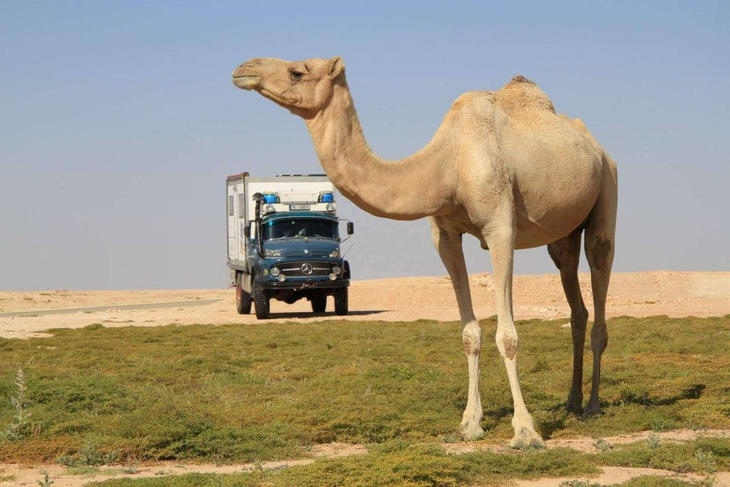 Mercedes 1113 im Oman