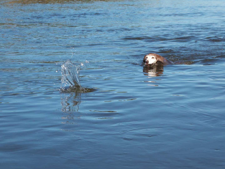 Lucy schwimmt in der Elbe