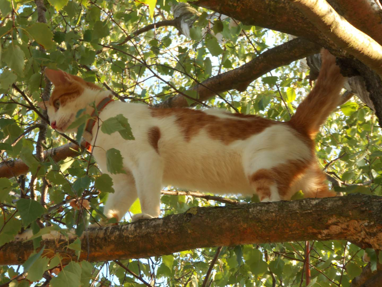Katzi flüchtet auf den Baum