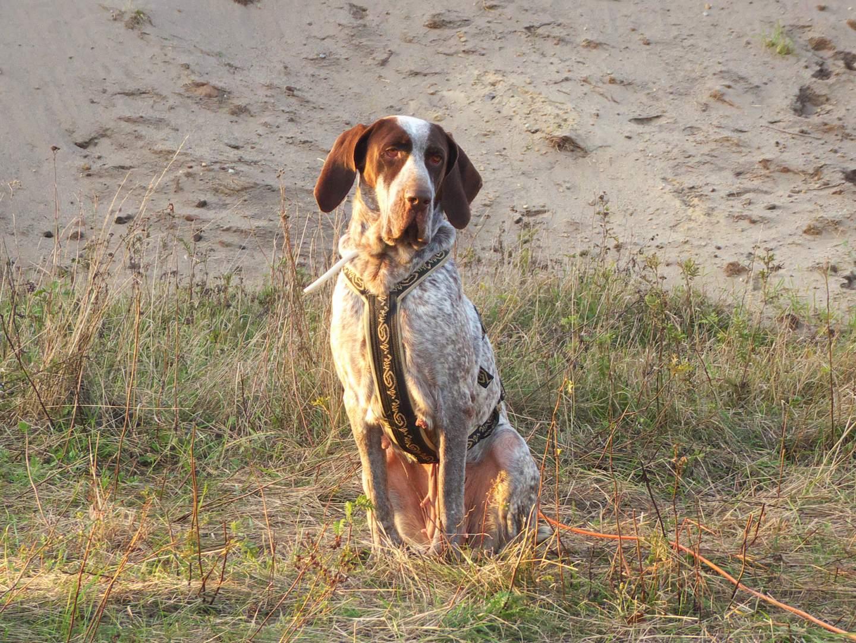 Pflegestelle Hund Greta