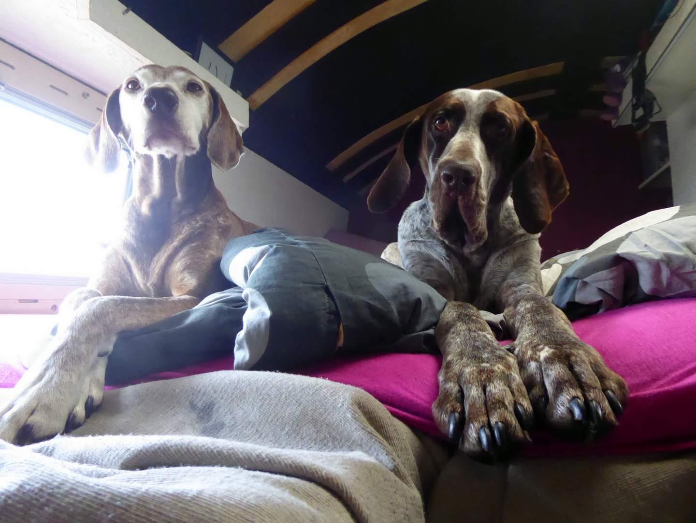 November 2018 - Greta und Lucy