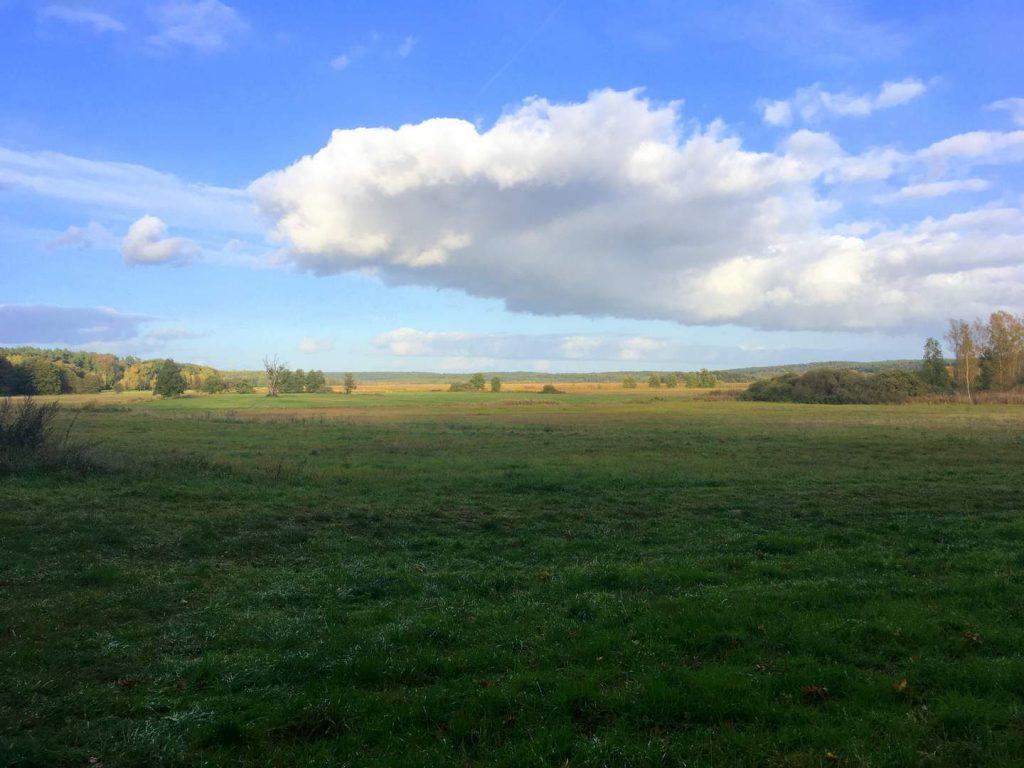 Rambower Moor