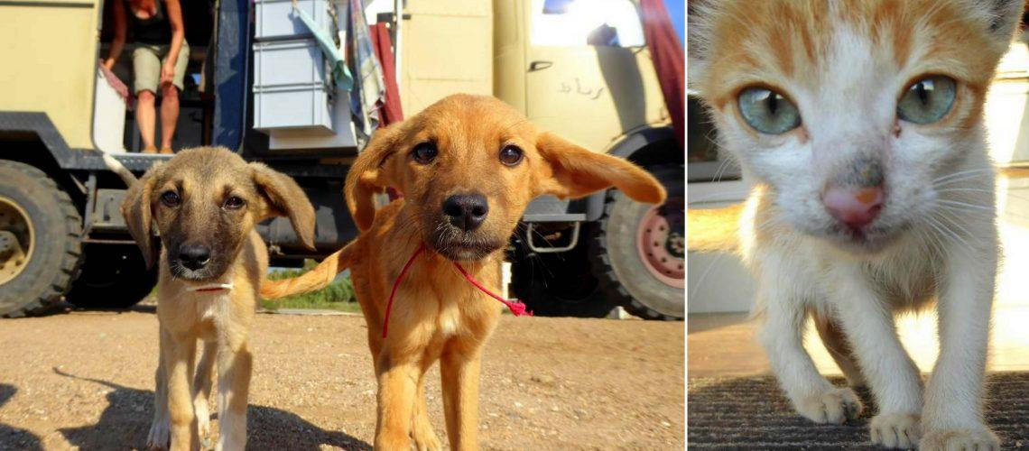 KE Artikelbild Hunde aus Griechenland