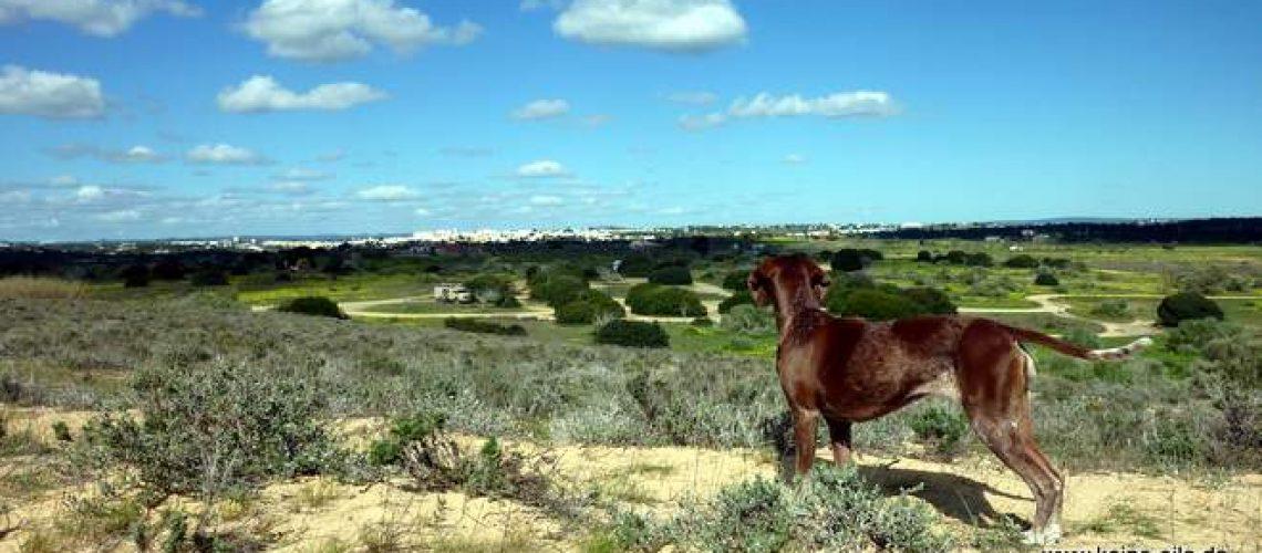 Am Praia Grande, Armacao de Pera, Algarve, Portugal